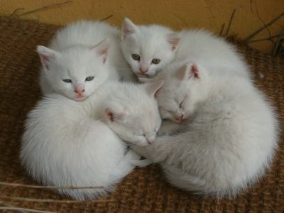 gattini%20bianchi dans Bibbia: commenti alla Scrittura