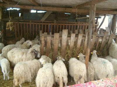 Recinto delle pecore gdr for Recinto elettrico per capre