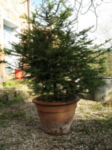 albero-natale-2