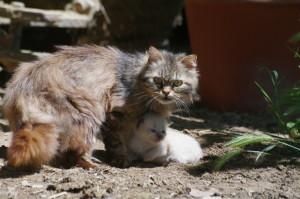 trasporto-gatto1