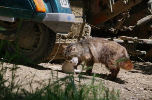 trasporto-gatto2