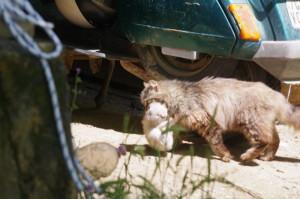 trasporto-gatto3