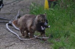 trasporto-gatto4