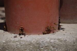 ritorno-delle-api-3
