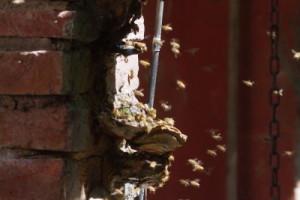 ritorno-delle-api-4