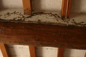 termiti1