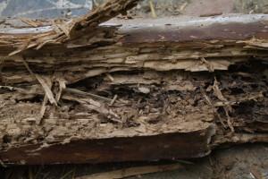 trave-termiti-2