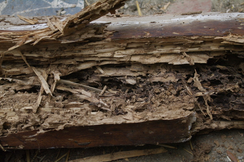 Vogliaditerra blog archive termiti in casa - Nido api finestra ...
