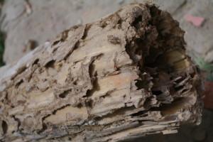 trave-termiti-21