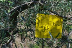 carta gialla
