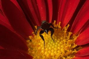 tipo-zanzara