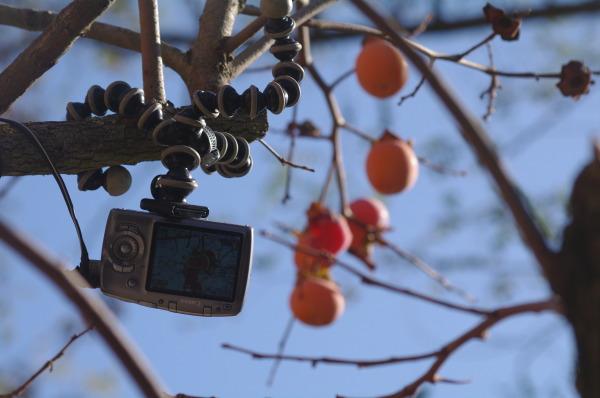 canon fototrappola in uso