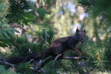 scoiattolo5