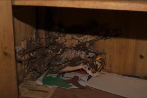 termiti-comodino7