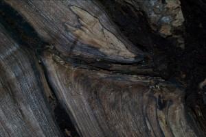 nocio-termiti
