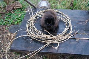 gatti-nel-cerchio1