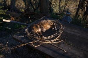 gatti-nel-cerchio2