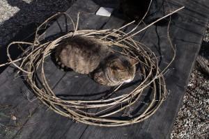 gatti-nel-cerchio3
