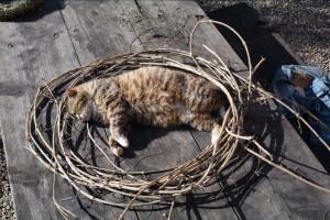 gatti-nel-cerchio4