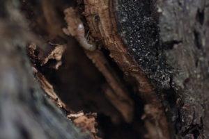 termiti-vigna2