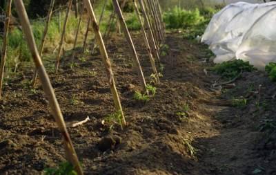 Vogliaditerra l 39 orto for Piantare pomodori